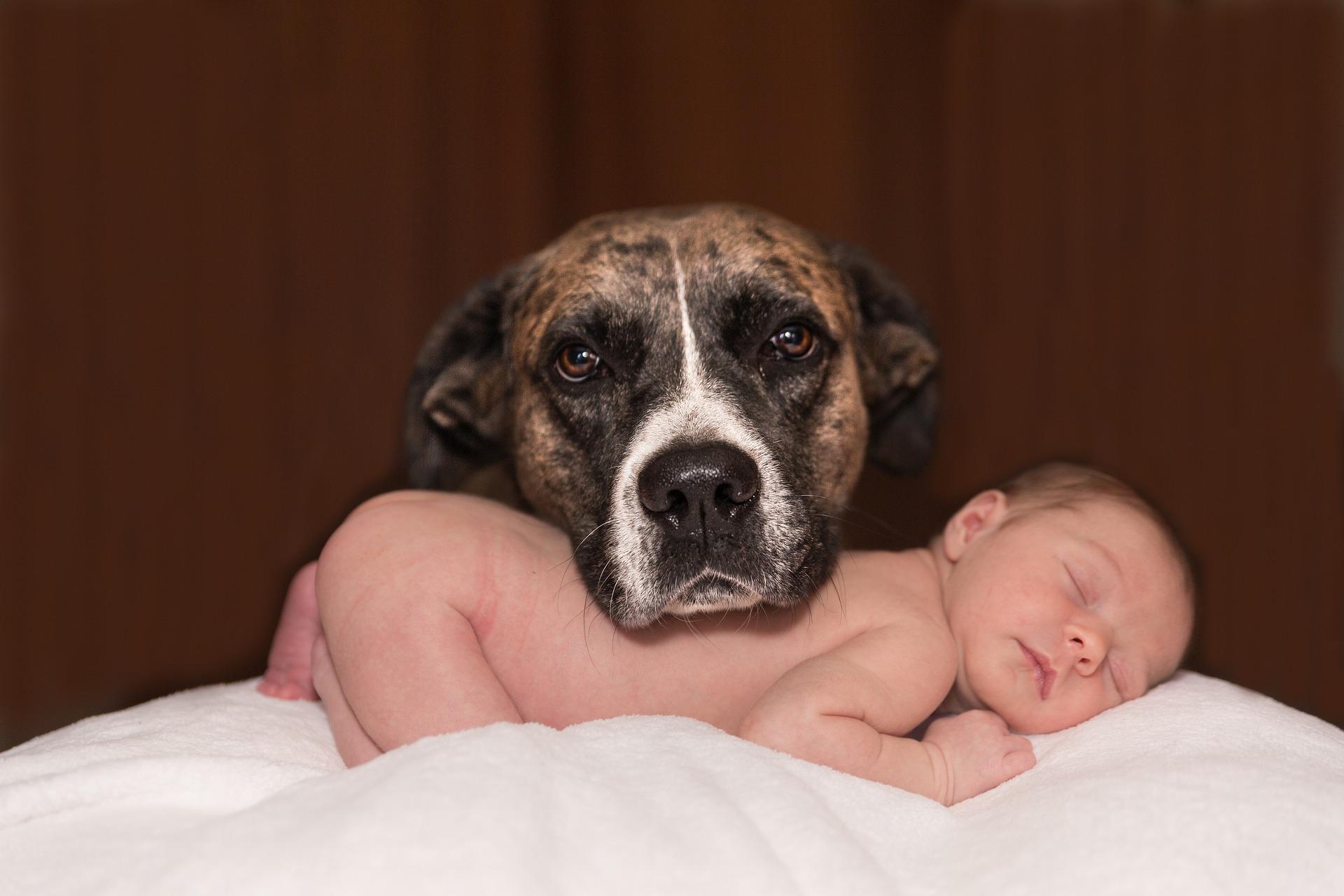 Un chien qui a sa tête posée sur le corps d'un bébé nu